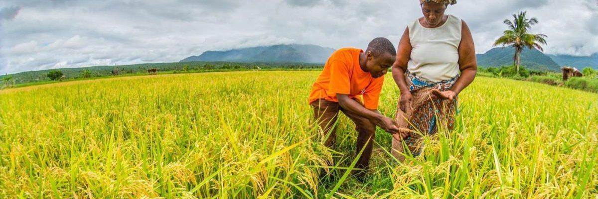 Landrechten & Milieu